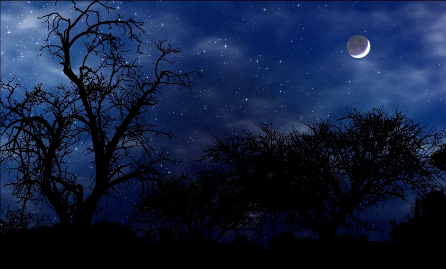 Night Nature Wallpaper   Wallpapers High Definition