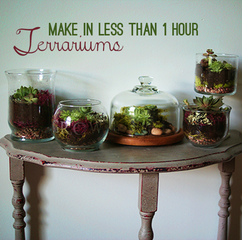how to make a small terrarium
