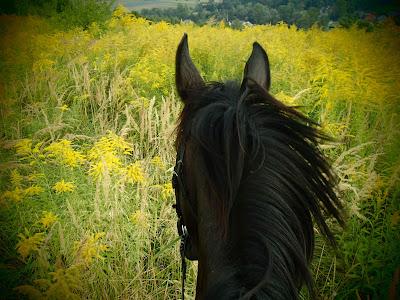 konie, kuce, jazda konna, trening w terenie, pensjonat dla koni w Węgrzcach, uprawa warzyw, dynie, melony, arbuzy, papryka, cukinie, kabaczki