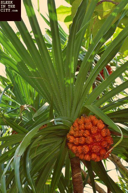 camiguin mantigue island wild plant