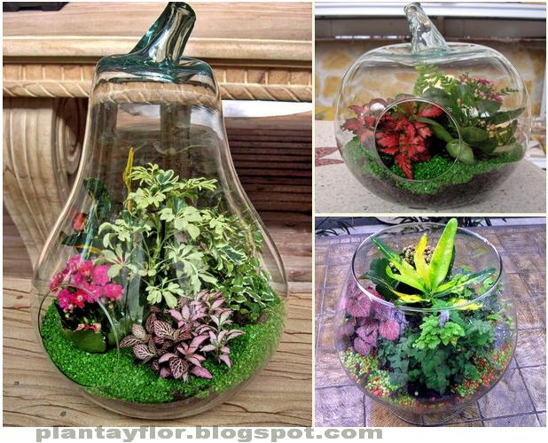Plantas y flores jardines en botella for Jardines en miniatura