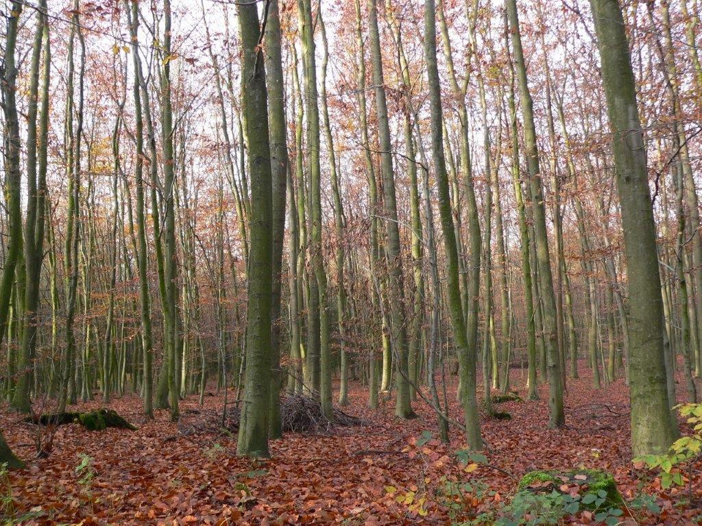 Spaziergang Winter Kalt Wochenende Laub Bäume Kahl