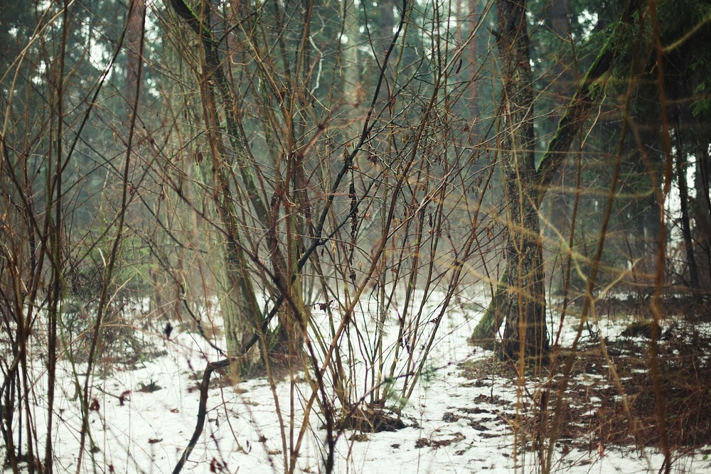 into the wild forest las zdjecia polska