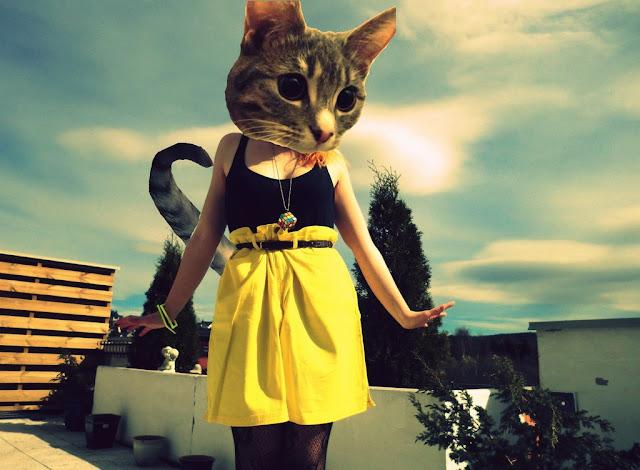 festina lente blog firenze cat head