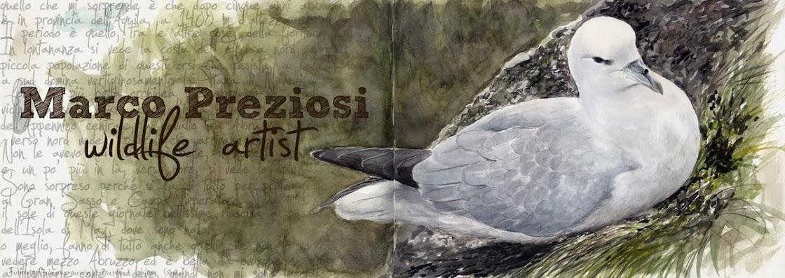 Marco Preziosi - Wildlife Artist