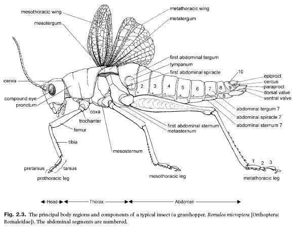 insects science  insect body regions