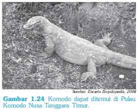 Komodo - Pelestarian Hewan / Fauna di Indonesia