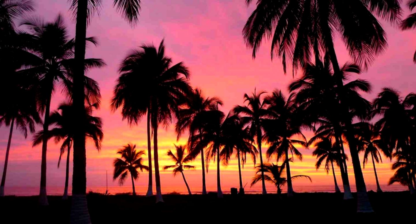 palm trees pink sunset ›