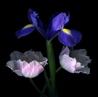 Tulipanes y Gladiolas