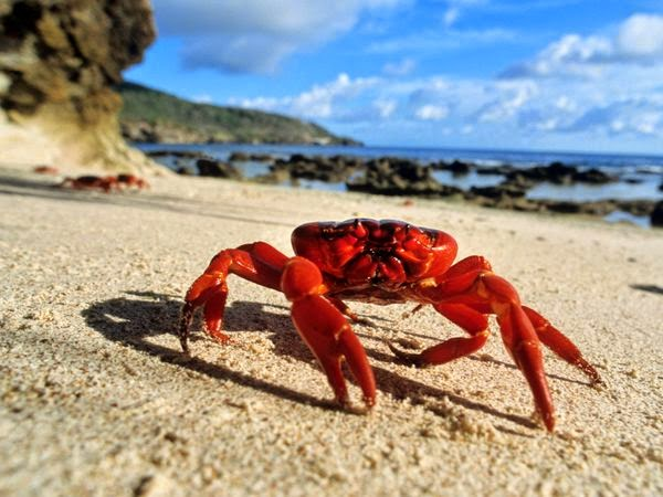 filipino crab mentality essay If the responsibility of environmentalism in the 3rd world countries is going to be left with the 1st world countries, it is only going to cause a crutch mentality and a great dependence on the 1st world countries whenever it comes to dealing with environmental issues that the 3rd world countries might face.