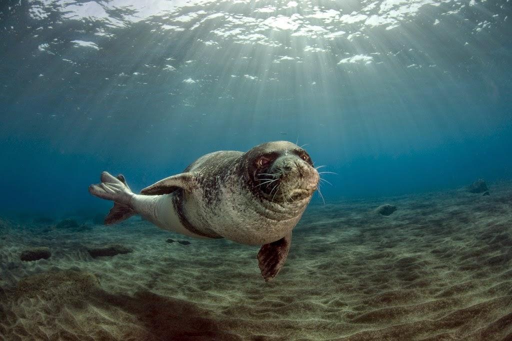 A vida dos animais marinhos