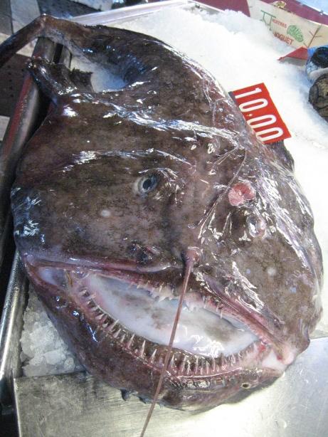 La cucina di sergio mezzi paccheri di gragnano al sugo di for Cucinare rana pescatrice