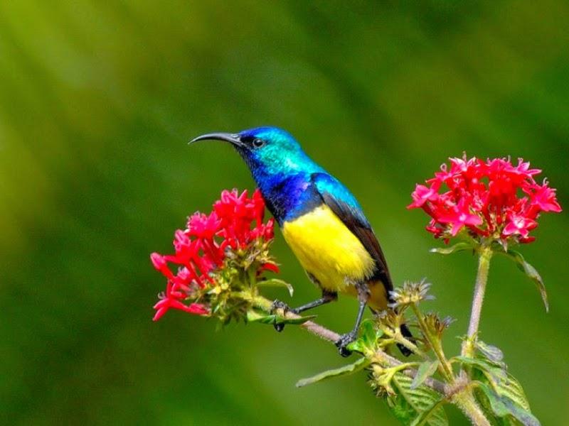 Flowers N Birds HD Wallpapers