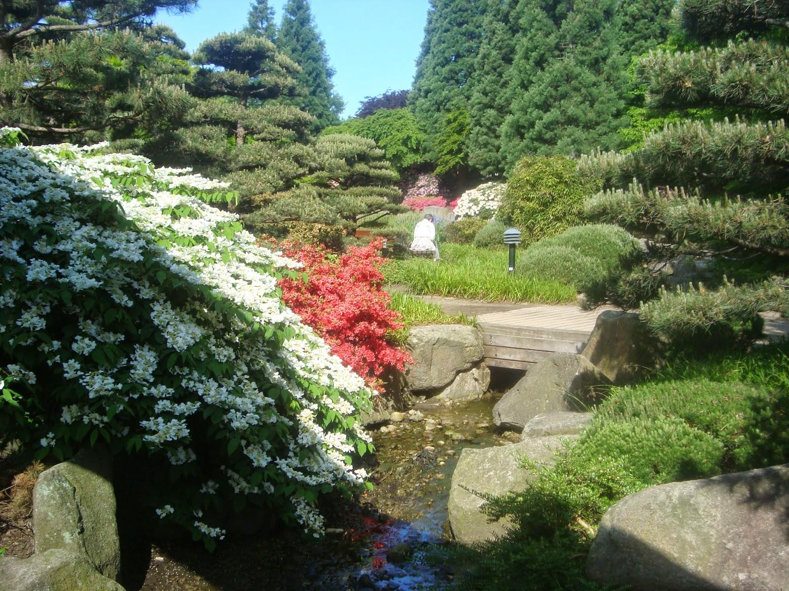 όλο τον ιαπωνικό κήπο διατρέχουν ρυακια