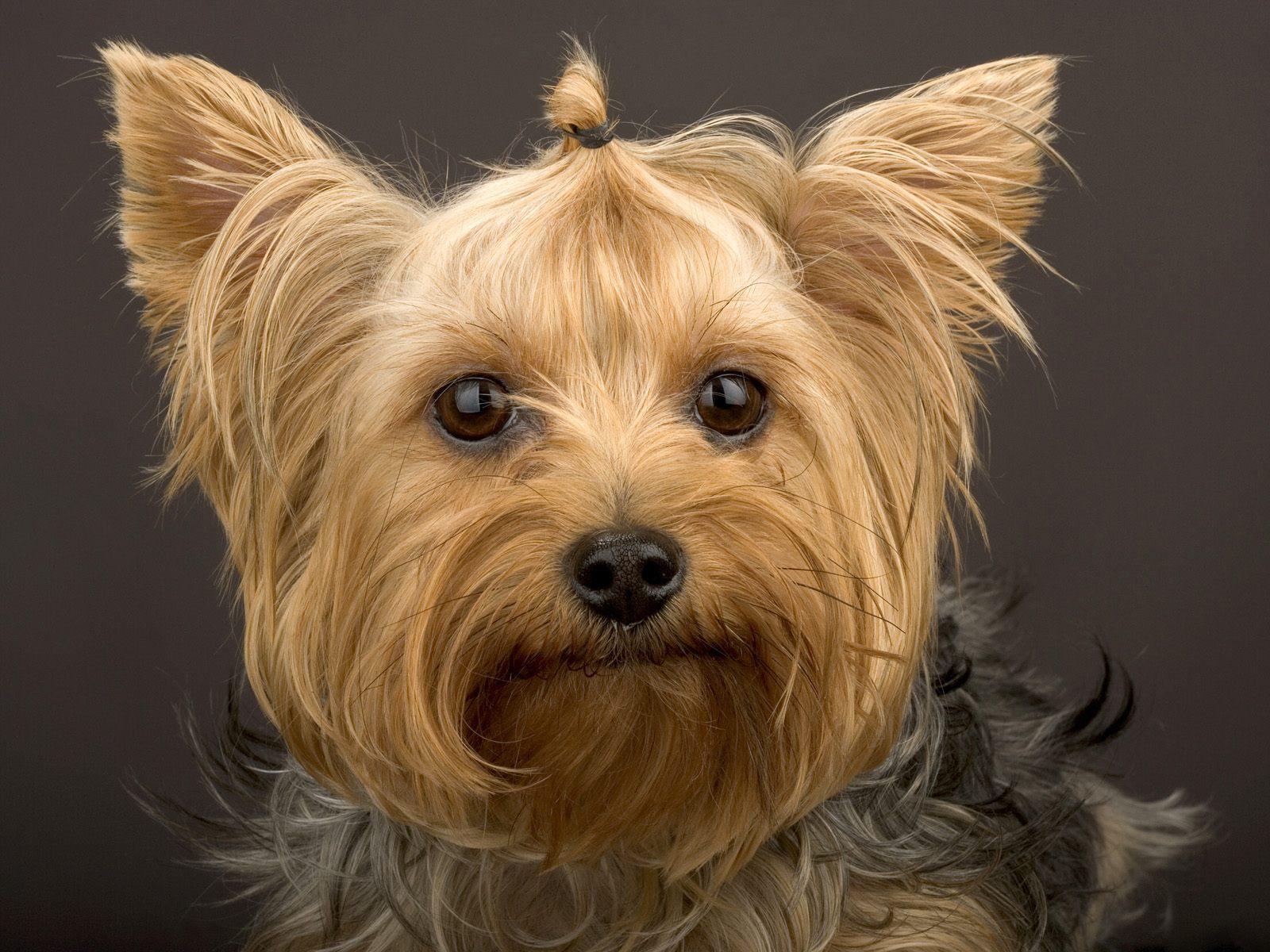 http://3.bp.blogspot.com/-Dcr2bviLx3s/Tp-3sVlkjPI/AAAAAAAAAhE/u5l56A2FOxM/s1600/Cute-Dog-Picture.jpg