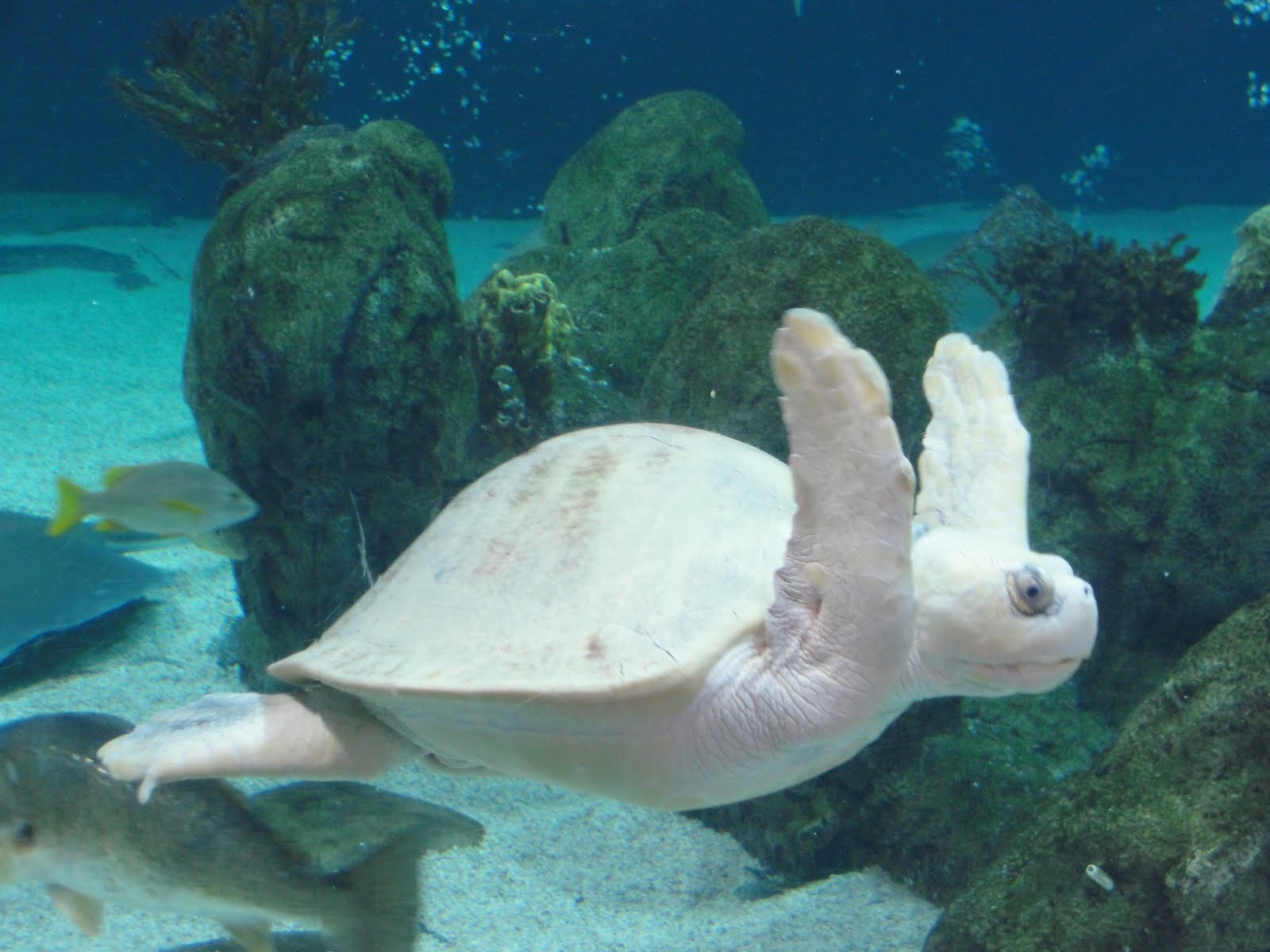 Reeves albuquerque aquarium for Ugly fish pictures