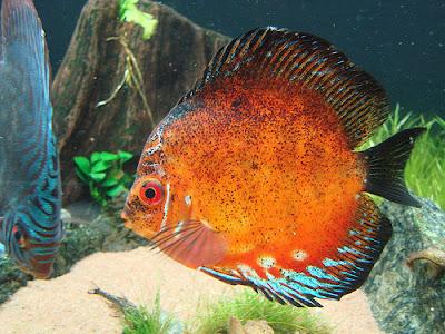 Hình ảnh các loài động vật đẹp nhất đại dương