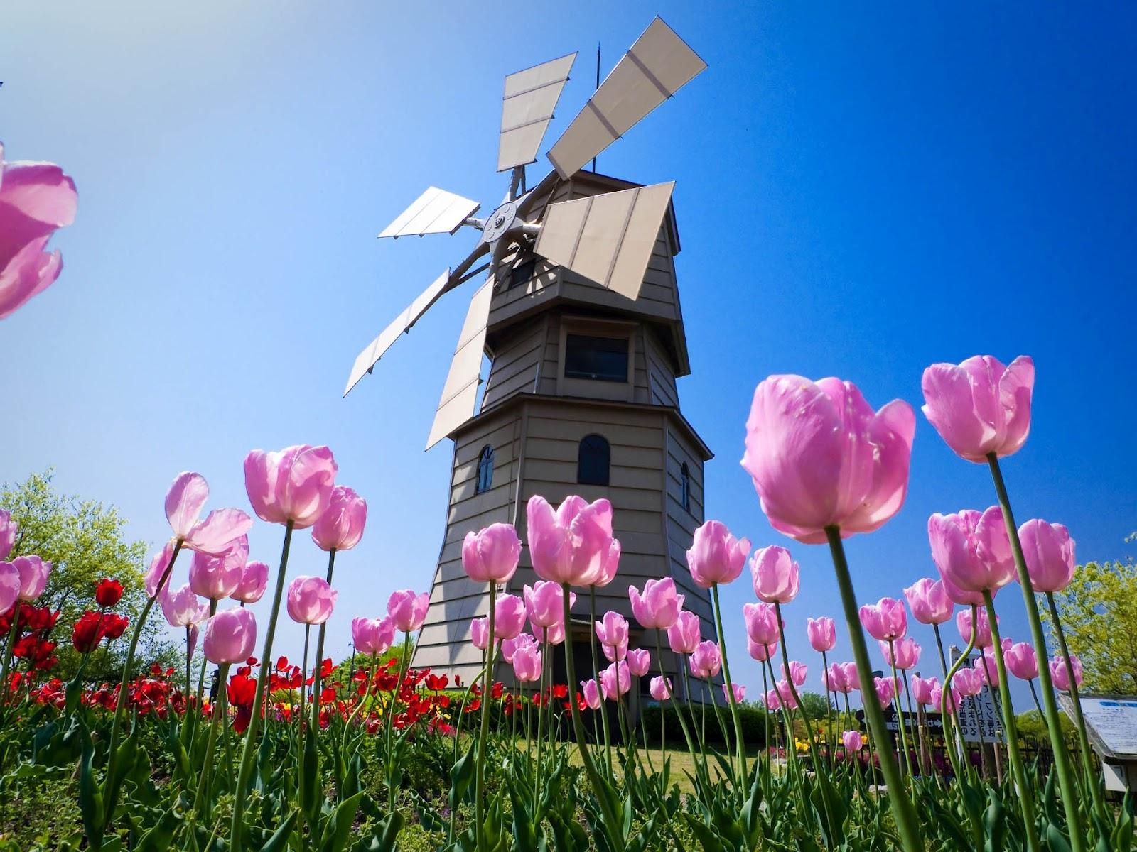 lente achtergronden hd - photo #20