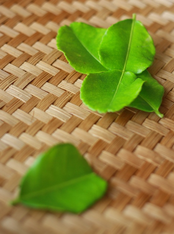 freshly picked kaffir lime leaves for spicy asian recipes