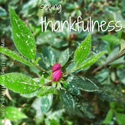 Seeing thankfulness blog challenge