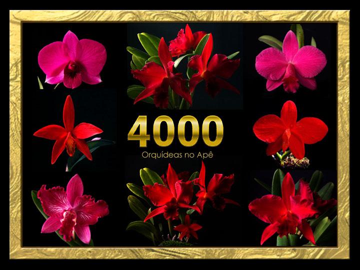 Orquídeas no Apê e no Facebook