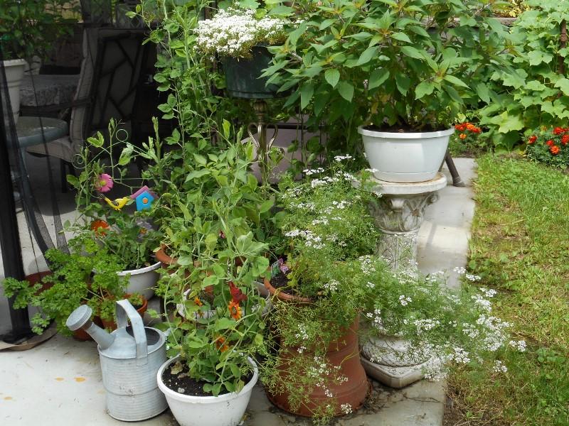 Pour se recr er visite de jardin for Jardin a visiter 78