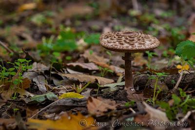 Ciuperca Mushroom