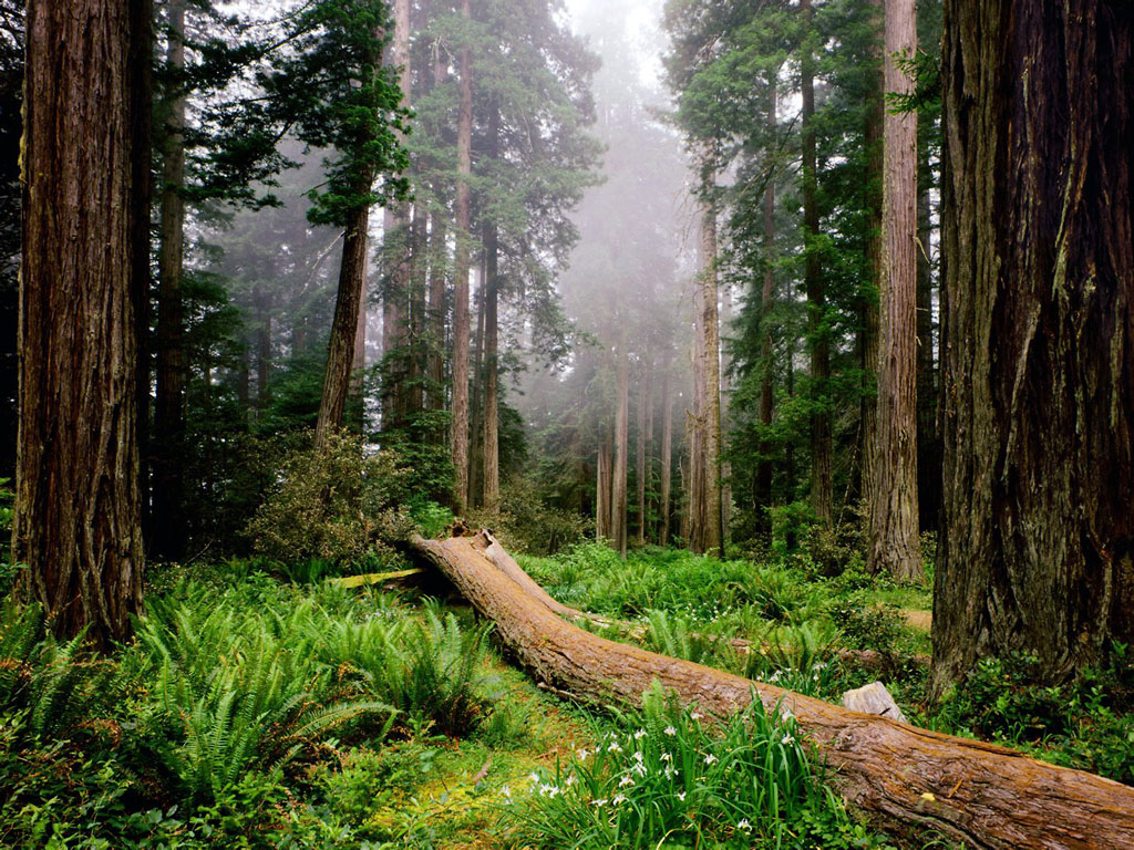 http://3.bp.blogspot.com/-Ddu4Ck_SF_4/TcwQ_BlUwZI/AAAAAAAAAW8/-LdxYheUoAM/s1600/Fallen_Nurse_Log%252C_Redwood_National_Park%252C_California%252C_USA.jpg