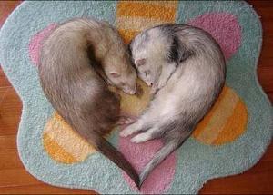 animales graciosos amor Imagenes chistosas de amor...