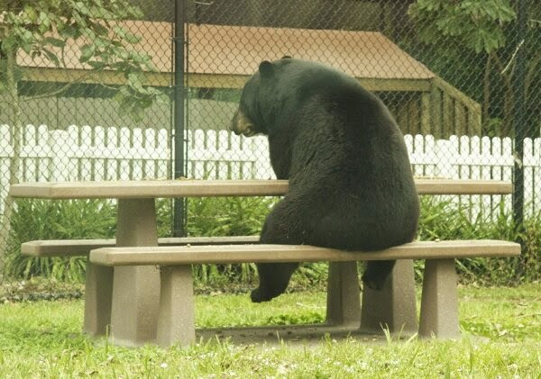 Funny animals of the week - 9 May 2014 (40 pics), cute animals, animal photos, bear sits on park bench