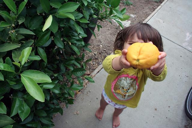 Using backyard lemons for homemade lemon curd