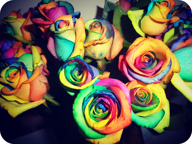 multicoloured roses, dyed roses