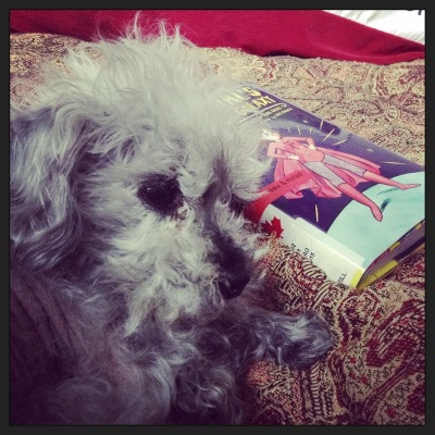 Murchie lays on a red tapestry comforter with his paws curled slightly in front of him. His facial hair is in disarray. Slightly behind him is a small, hardcover copy of The Fangirl's Guide to the Galaxy. Its cover features a drawing of a pale skinned girl in a red superhero costume. She stands with her hands on her hips.