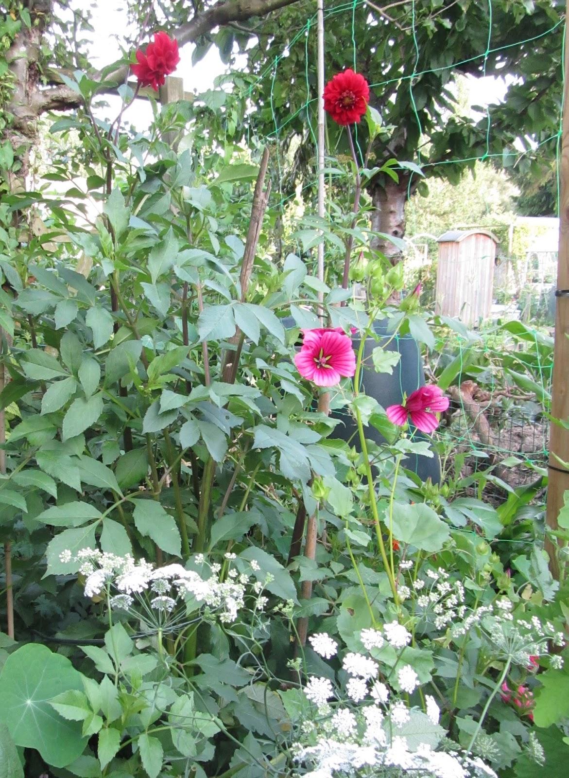 Het tuinhuisje van roos raak: een rondje door de tuin begin augustus