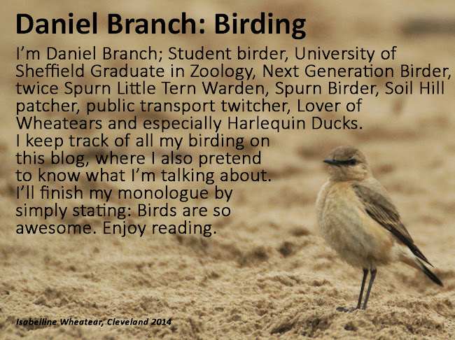 Daniel Branch: Birding