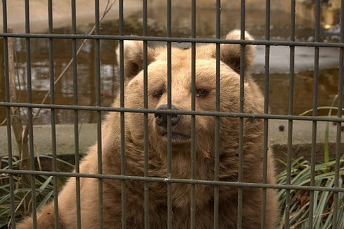 all zoo should be close down captive animals rehabilitate The following script is from back to the wild which aired on march 15, 2015 lesley stahl is the correspondent shachar bar-on and alexandra poolos, producers more americans go to zoos every.