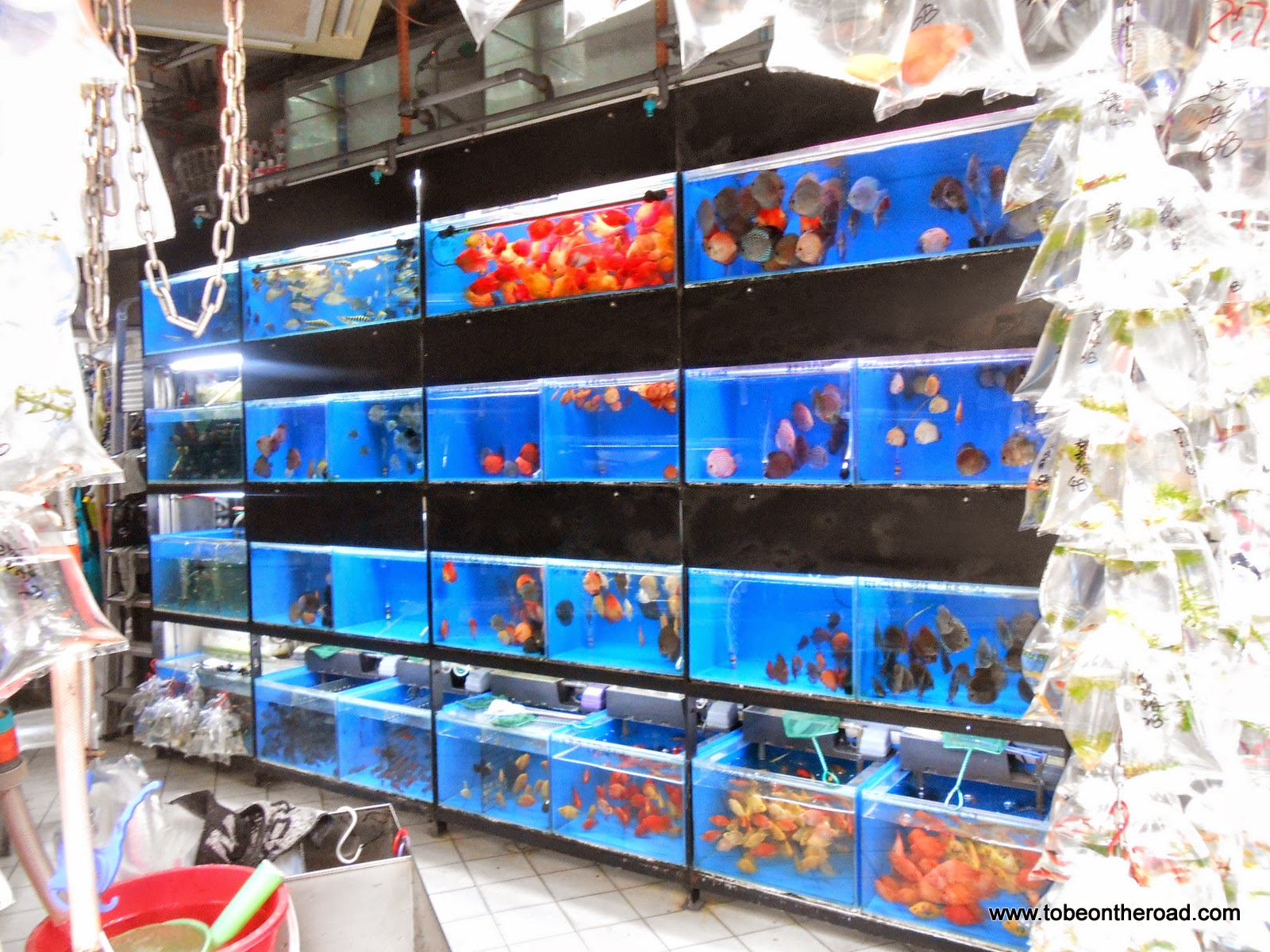 Aquarium, Gold Fish, Hongkong, South East Asia,