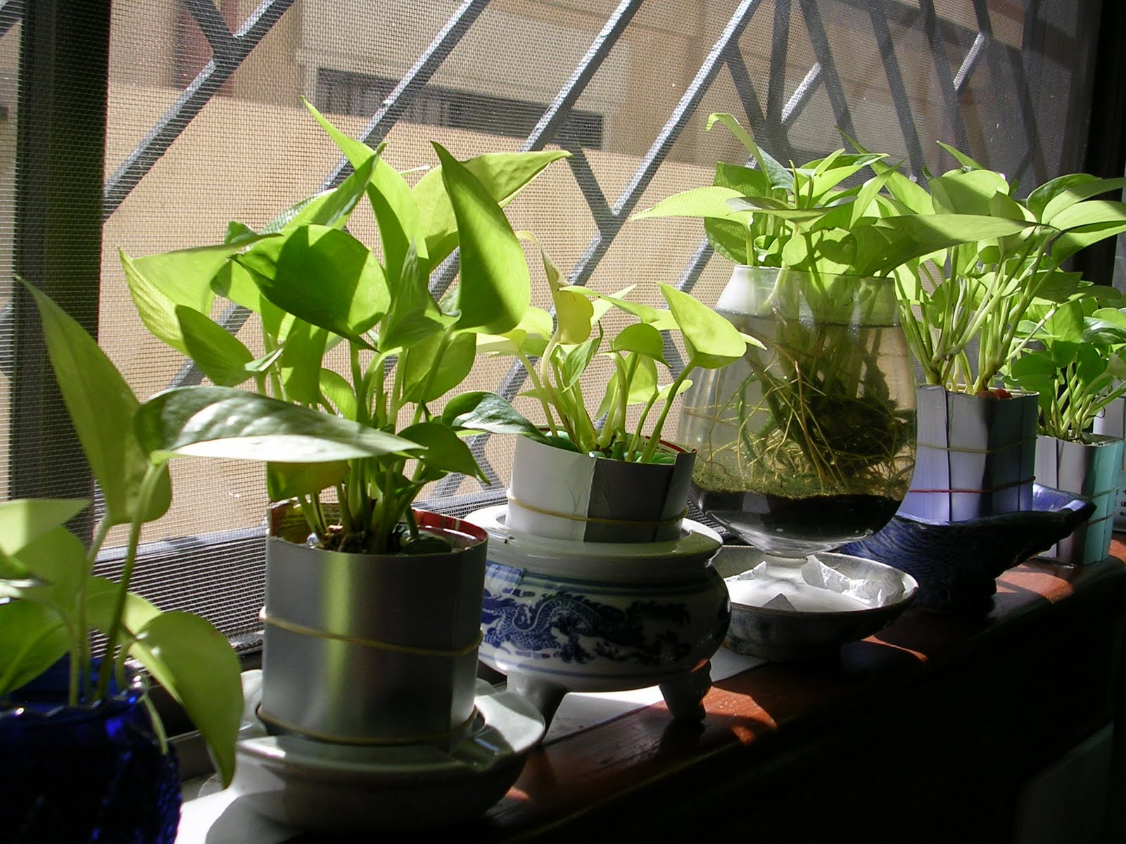 Kitchen window for plants - What I Like About Low Tech Hydrophonic Gardening Is That It Offers A Clean Way To Put In Live Plants Inside The House Without Bringing In All
