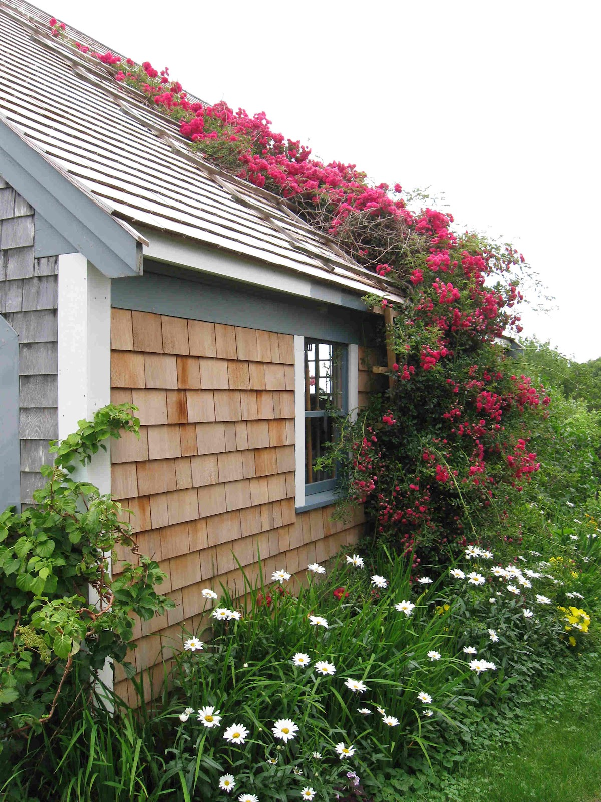 Cape Cod Rose Part - 41: Close Up Of Cape Cod Rambling Rose Covered Roof Trellis Photo Courtesy Of  Ark Gardens