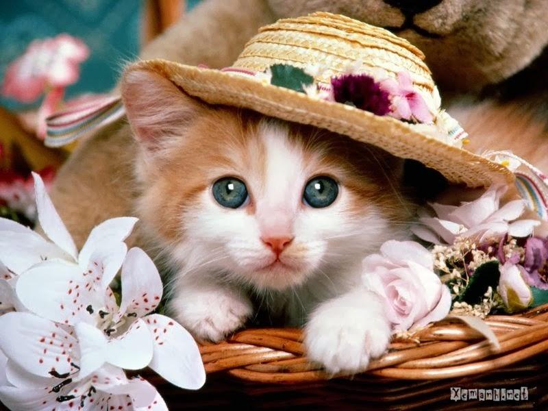Kumpulan Gambar Hewan Kucing Lucu dan Ngakak