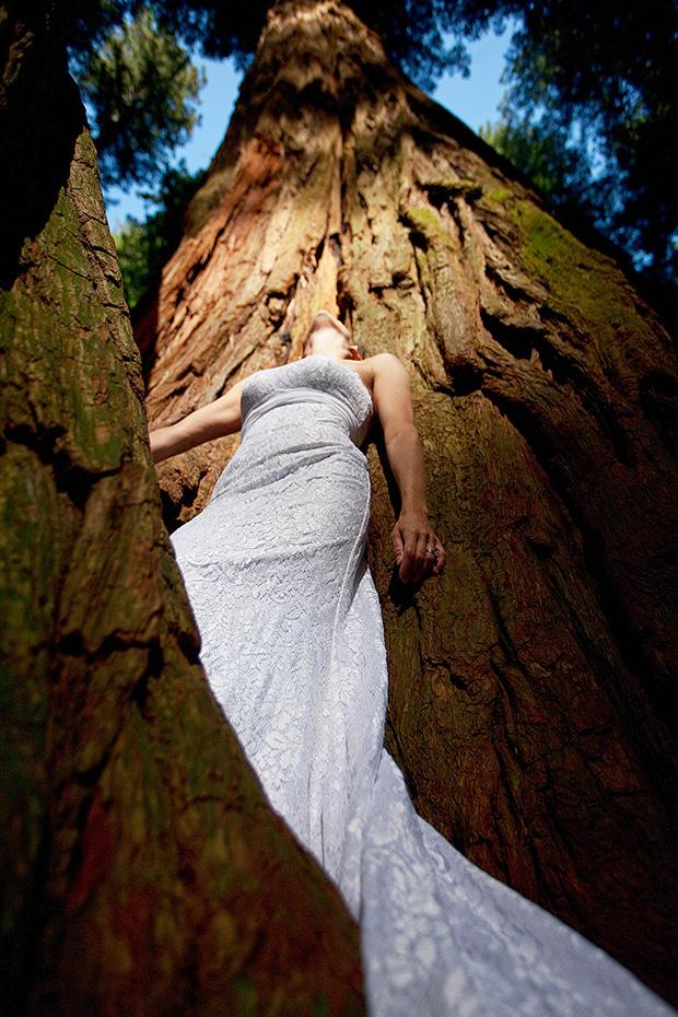 美國加州紅木國家森林(Redwood National Forest, California)