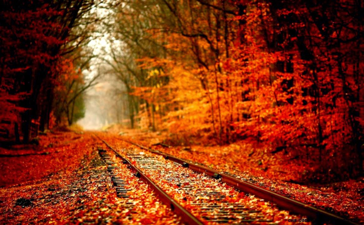 fall leaves background tumblr wallpapers gallery