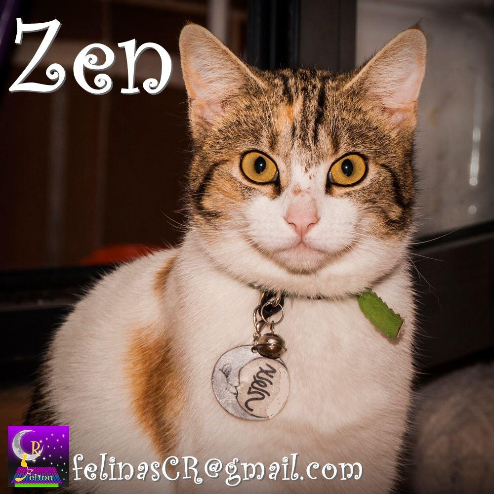 ZEN [ADOPTADA], calicó gata en adopción