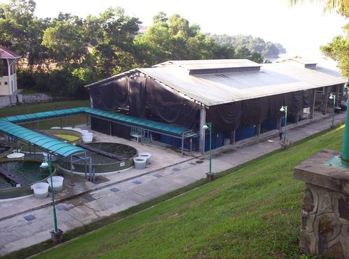 Asesor a trucha y tilapia ventajas for Proyecto de cria de peces en estanques