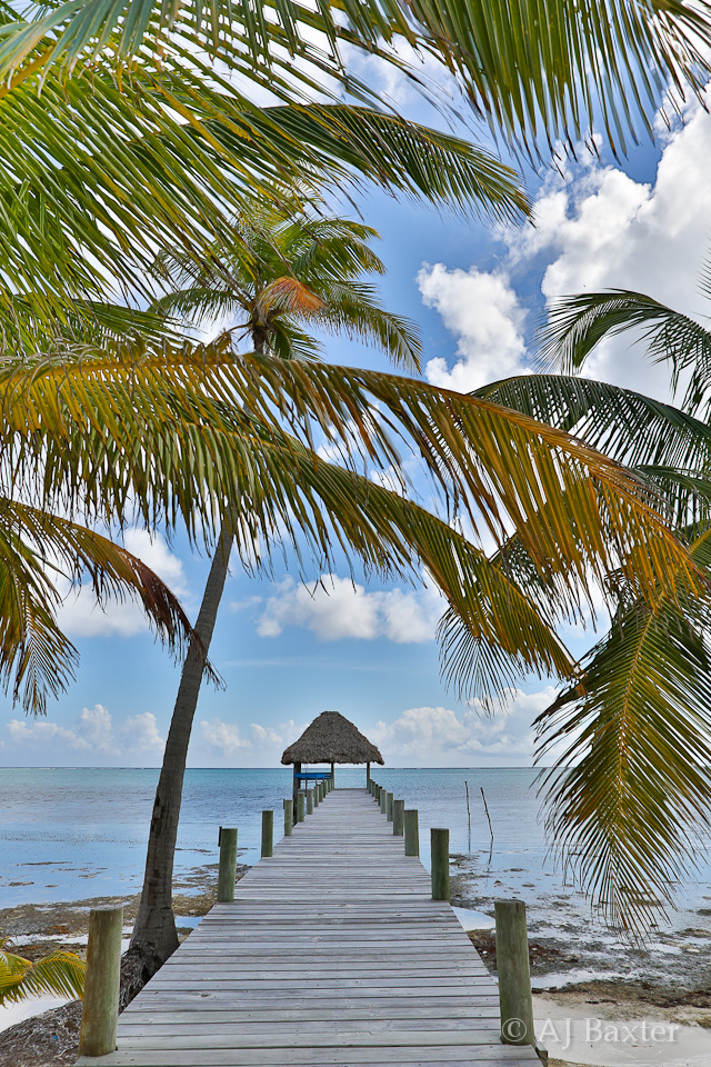 Image from Belize:  palapa, dock, palm trees, caribbean sea, tropical