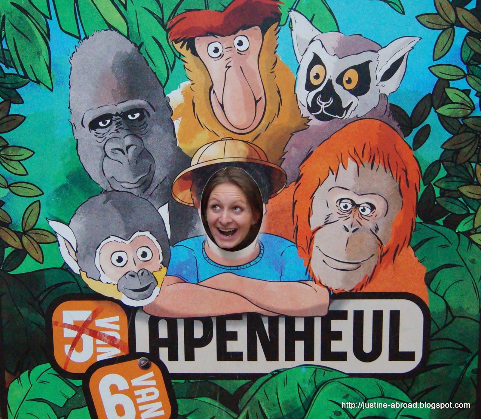 Goryl Jambo, orangutan Sandy, nosacz Jeff, lemur Herbert