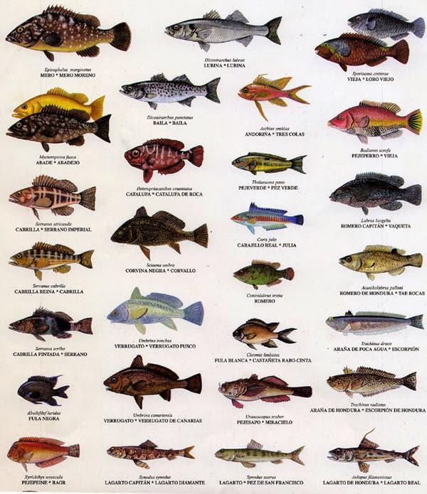 Peces crustaceos y moluscos mayo 2014 for Variedad de peces