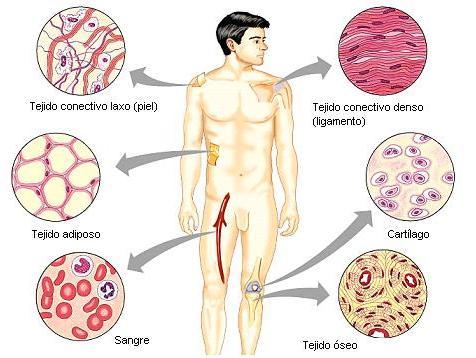 Resultado de imagen para que es la histologia animal