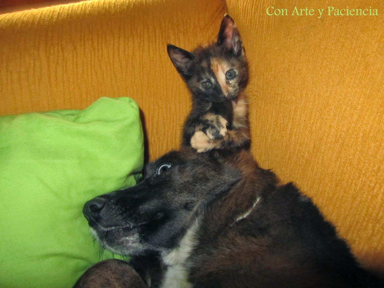 Cat,gato,gatito,kitty,bonitos,cute,tiernos,tenders,mascotas,pets,imagenes,dormir,sleep,bonitos,