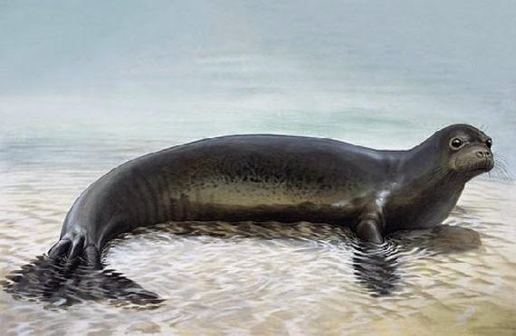 Πρόσφατα εξαφανισμένα είδη ζώων που απαθανάτισε ο φωτογραφικός φακός! Παράξενα περίεργα ζώα!
